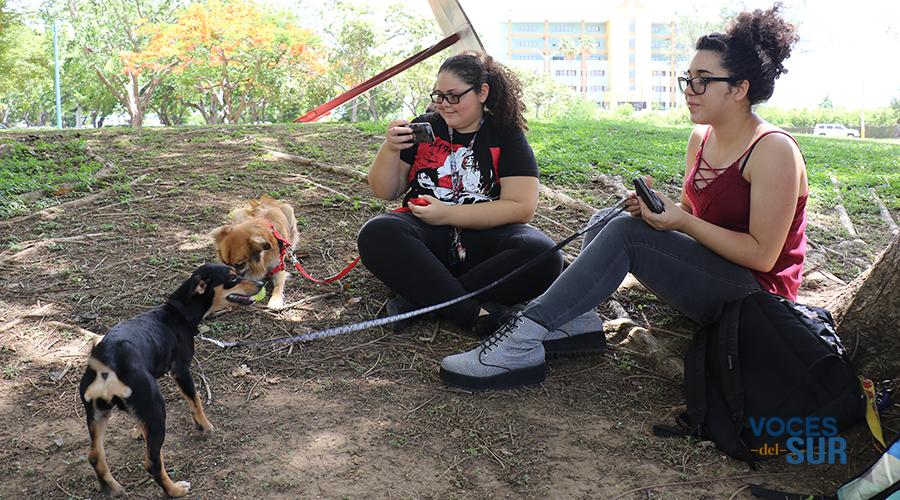 Preshley Vélez y Ana Vázquez comparten con Lady y Nala, respectivamente, durante un evento de citas en UPR Ponce. (Voces del Sur)