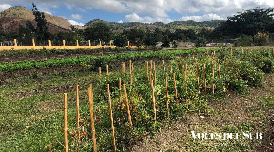 En un lapso de seis meses, han logrado sembrar 172 plantas de plátano y 50 árboles de papaya y más.