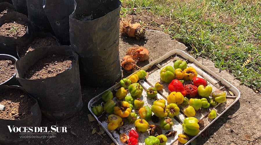 Por medio de las cosechas, la iniciativa ha generado ingresos que son reinvertidos en la compra de semillas, alimentos y otros artículos.