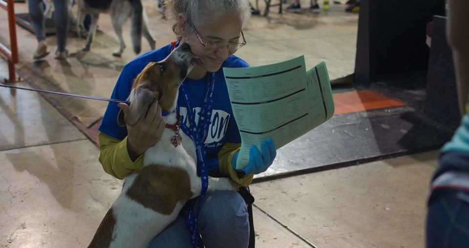 Personal del Santuario de Animales San Francisco de Asís requiere de voluntarios que los ayuden a manejar las clínicas de esterilización gratuita en Guayama.