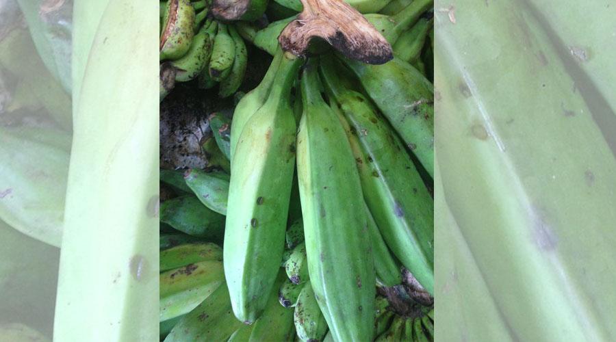 Plátanos. (Flickr / Ecomanglar Ecotours)